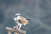 きらら浜自然観察園 - poiyoの野鳥を探しに