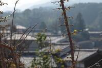 途中ですが・・・葛城當麻・その・01 蝋梅 - ぶらり記録(写真) 奈良・大阪・・・