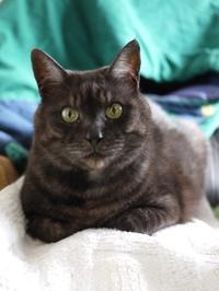猫のお留守番 マー君くん編。 - ゆきねこ猫家族