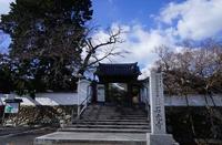 石光寺の寒ボタン@2018-01-12 - (新)トラちゃん&ちー・明日葉 観察日記