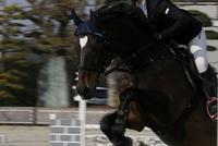 Horse - Hana-iro*