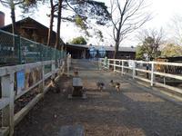 自由なマーラたち - 動物園へ行こう