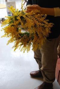 ミモザのリースワークショップの募集のお知らせ。 - 花と暮らす店 木花 Mocca