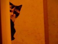 @廊下 - 愛犬家の猫日記