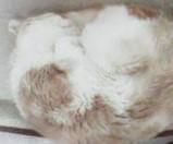 寝る☆ - 猫の小路