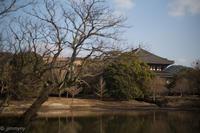 奈良公園冬風景 - TAKE IT EASY