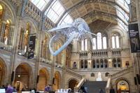 """英国自然史博物館 """"The Natural History Museum"""" - ITALIA Happy Life イタリア ハッピー ライフ  -Le ricette di Rie-"""