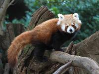 1月22日(月)バナナワニ園 - ほのぼの動物写真日記