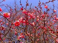 紅梅と風野真知雄1月21日(日)その2 - しんちゃんの七輪陶芸、12年の日常
