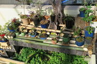 実生苗でミニ盆栽 - 光さんの日常