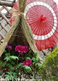 第36回 上野東照宮の冬ぼたん祭りに行ってきました(^^♪ - 自然のキャンバス