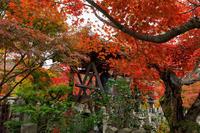 京都の紅葉2017 鮮やかに色づく化野念仏寺 - 花景色-K.W.C. PhotoBlog