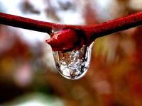 寒い朝に・・・ - 自然がいっぱい3