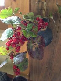 冬イチゴ - 松尾山荘 アトリエ吾亦紅