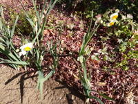 春を待つこころ、その1 - 自然の食卓 ブログ