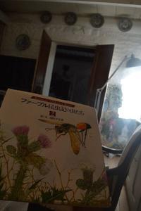 ファーブルと虫さん達 - アルルの図書館* 旅する古道具屋