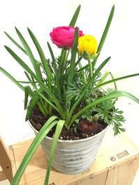 2月のスポットレッスン - ~ Flower Shop D.STYLE ~ (新所沢パルコ・Let's館1F)