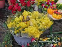 """""""ろーま、うれしい春の訪れ♪"""" ~ カンポ・デ・フィオーリ市場から ~ - 「ROMA」在旅写ライターKasumiの最新!イタリア&ローマあれこれ♪"""