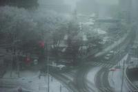関東の雪。 - 野だてnote
