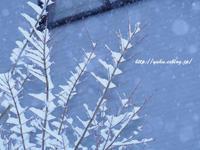 外は雪!大雪!!ですが、秋の日光の続き・・・・ - たゆたふままに