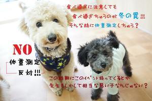 犬の幼稚園 chouchou ~シュシュ~