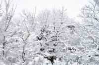 大雪警報発令ちう - ★☆みなさんぽんちくわ2☆★