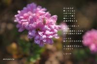 決意 - Poetry Garden 詩庭