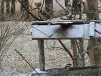 雪が降る前に - 風路のこぶちさわ日記
