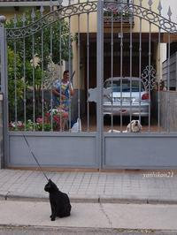 Campo de Criptana Ⅲ / Spain - 花鳥風猫ワン