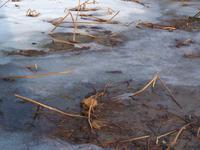 #972雪の中の蓮畑 - 想い出cameraパートⅢ