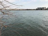 淀川でひたすらディープクランク - WaterLettuceのブログ