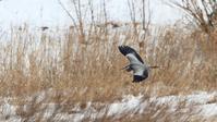 大雪になりました - Life with Birds 3