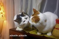 《我が家の猫ストーリー過去記事から》NO 2 ミント姉ちゃん好き好きジュンくん - 今が一番
