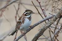 1月14日探鳥会に参加しました - poiyoの野鳥を探しに