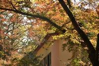 紅葉の頃の檜原村☆彡 - 僕の足跡