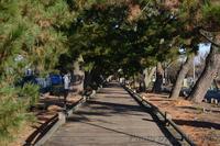 三保の松原 - カワセミ王国