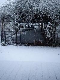 4年ぶりの雪、よく降りましたね・・・ - Baking Daily@TM5