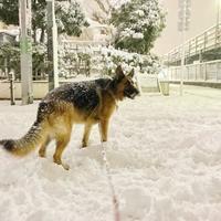 雪初体験♪ - ** Hiwahiwa ohana **