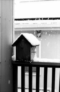 雪の日の写真 - パトローネの中