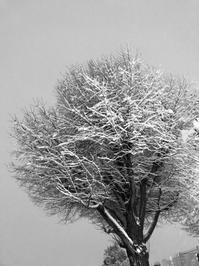東京に大雪 - ぺんたのPhoto Life