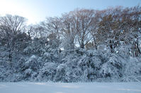 都立赤塚公園  雪の朝 - 東京雑派  TOKYO ZAPPA