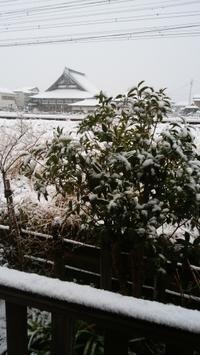 雪の日 - てんねん生活 ARAKOKI