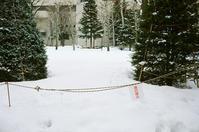 札幌の雪の現況と去年の雪 - 照片画廊