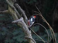 近郊探鳥、 - ぶらり探鳥