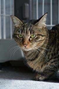 不機嫌なウメ - Black Cat Moan