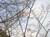 白野江植物公園、か~ら~の~? - ロンの釣り、時々日常。