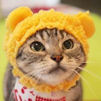 くまちゃん帽もらったにゃ♪ - 愛しき猫にゃん♪