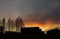 とても寒い日-'18.01.12- - It's only photo