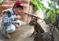 動物王国 - nyaokoさんちの家族時間