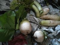野菜たくさん - Harmonicハーモニックのブログ